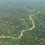 Presentan datos sobre apertura de caminos en el bosque amazónico