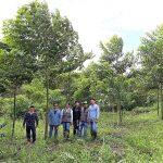 San Martín: Implementan recuperación de suelos degradados