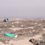 Tacna: Destruyen ejemplares de tillandsia, planta típica del desierto costero