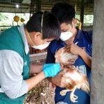 Ucayali: Descarte de influenza aviar en granjas y corrales cercanas a lagunas