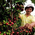 Amplían plazo para recoger aportes al Plan Nacional del Café