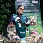 Decomisan mil partes de animales silvestres disecados, ranas vivas y productos usados en curanderismo
