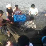 Huánuco: Promueven crianza de peces amazónicos