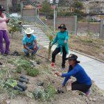 Ayacucho: Siembran plantas ornamentales en Jesús Nazareno