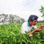 Bolivia: Acelerado proceso de extranjerización de tierras