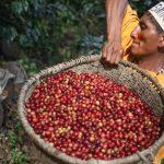 Caficultores nomatsiguengas son ejemplo para comunidades nativas productoras
