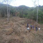 Huánuco: Combatiendo la deforestación en Carpish