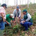 Ucayali: Impulsan control biológico entre productores frente a plagas forestales