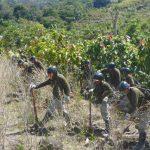 Corah erradica más de 19 100 hectáreas de cultivos ilegales de hoja de coca en 2018