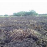 Extinguen incendio forestal cerca a zona arqueológica de Marcahuamachuco