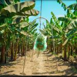 Impulsan proyectos de reconversión productiva agropecuaria en Piura