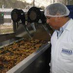 Minagri impulsa exportación de kion y cúrcuma de la selva central