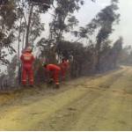 Prosigue lucha para extinguir incendios forestales en tres regiones