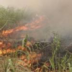 Van 38 incendios forestales en lo que va del año