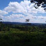 Avanza zonifiación forestal en la región Huánuco