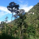 Conoce la nueva Área de Conservación Privada de la región Amazonas