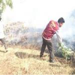 Extinguen incendio forestal en Ayacucho