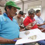 Promueven calidad en cadena de valor de la castaña amazónica