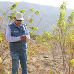 Arequipa: Productores de durazno con planes de mejora para sus cultivos
