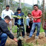 Cultivo del palto gana más adeptos en Huánuco