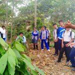 Devida y Serfor combaten deforestación en el Vraem