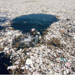 El plástico: La especie más peligrosa del mar