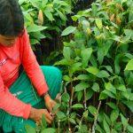 Huánuco invierte más de s/ 28 millones en proyectos de forestación