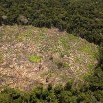 Perú recibirá US$ 230 millones de Noruega para reducir deforestación amazónica
