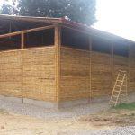 San Martín: Impulsan el cultivo del bambú para su industrialización y recuperación de suelos degradados
