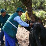 Vacunación contra la rabia en el Vraem superó meta proyectada