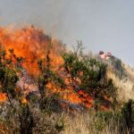 Aprueban Plan de Prevención y Reducción de Riesgos de Incendios Forestales