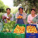 Ayacucho: Hortalizas frescas de Haku Wiñay alimentan a escolares de Qali Warma