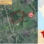 Extinguen incendio forestal en Ucayali