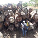 Impulsan optimización en la gestión de recursos madederos de la selva