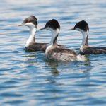 Conoce los 10 humedales Ramsar del Perú en áreas naturales protegidas
