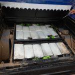 Decomisan 40 kilos de cocaína en el Vraem