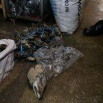 Decomisan más de 400 partes de animales silvestres en La Victoria