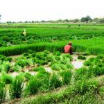 Impulsan una nueva visión agrícola para San Martín