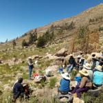Arequipa: Promueven optimización de cultivo y comercialización del durazno en Lluta