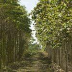 Minagri agrega tres indicadores forestales para impulsar el sector