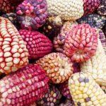 Bolivia: Urge proteger las semillas nativas