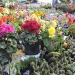 Huancayo: Alistan VII Festival de plantas forestales, ornamentales y frutales
