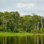 Perú apuesta por manejo sostenible de sus bosques