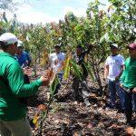 San Martín: Impulsan cambio de cultivos ilícitos por programas de desarrollo alternativo