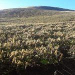 Diez hectáreas de cultivos afectadas por heladas en Apurímac