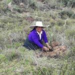 Instalan 65 000 plantones en localidades de La Libertad
