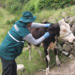 Senasa fortalece acciones preventivas contra la rabia en Amazonas