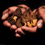 Cusco: hongos andinos son aliados contra la desnutrición