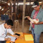 Realizan control sanitario en eventos gallísticos en Ucayali