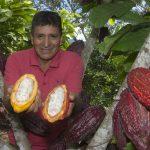 Apoyan a campesinos de Mazamari con la siembra de cacao de alto rendimiento